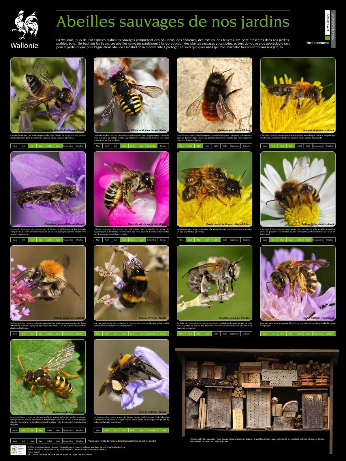 insectes du jardin gendarme